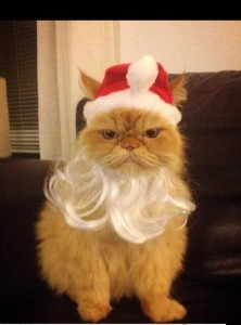 Animals Who Just Don't Care About Christmas (32 photos) 28