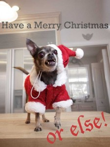 Animals Who Just Don't Care About Christmas (32 photos) 3