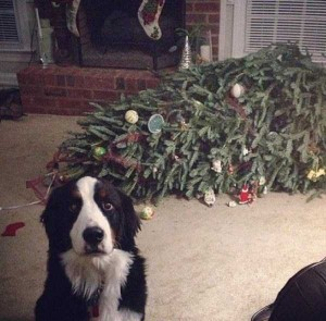 Animals Who Just Don't Care About Christmas (32 photos) 30