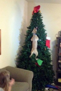Animals Who Just Don't Care About Christmas (32 photos) 4