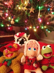 Animals Who Just Don't Care About Christmas (32 photos) 5