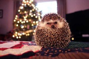 Animals Who Just Don't Care About Christmas (32 photos) 9