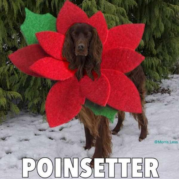bad-christmas-puns (5)