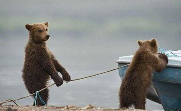 bears-acting-like-humans (2)