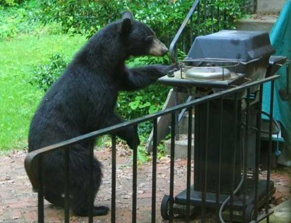 bears-acting-like-humans (34)
