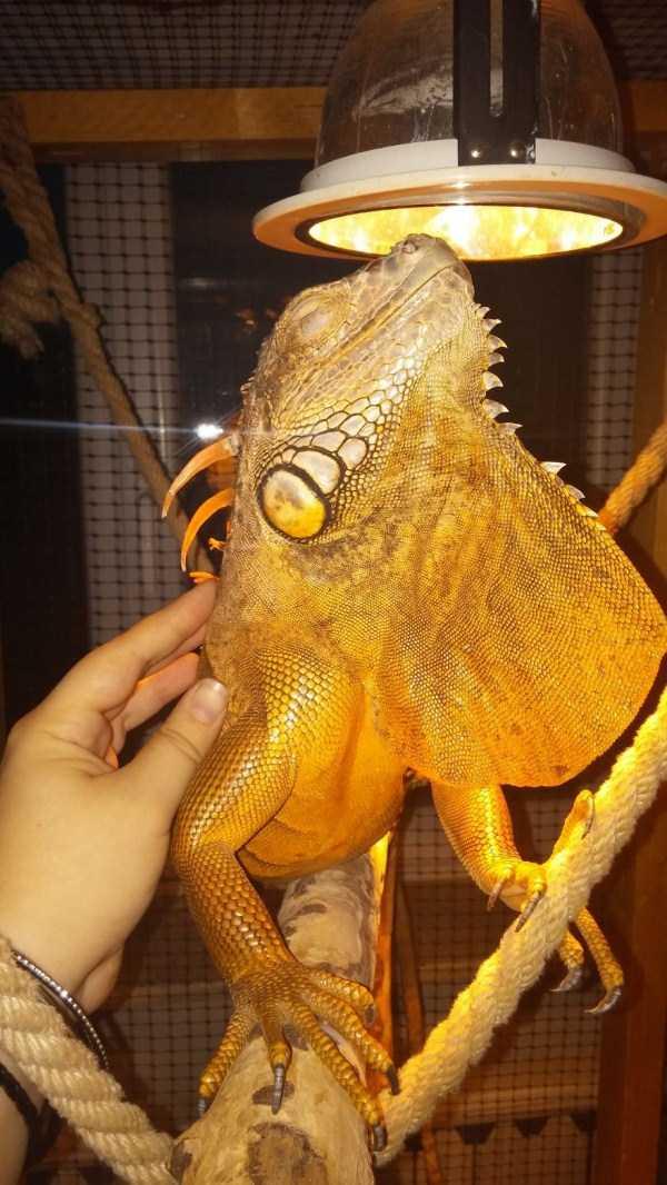 cute-reptiles (1)