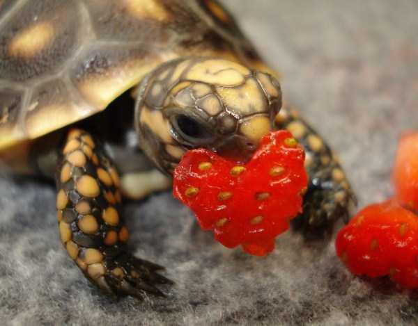 cute-reptiles (11)