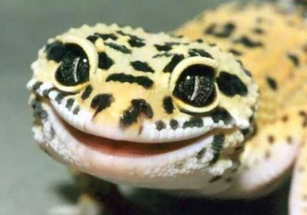 Awesomely Cute Reptiles (33 photos) 12