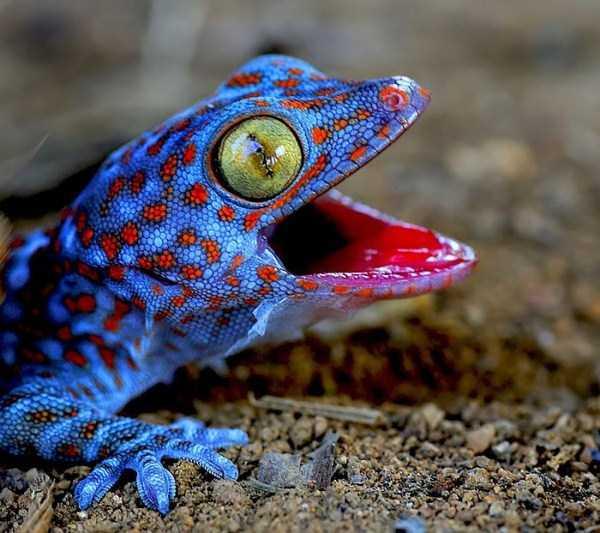 cute-reptiles (13)