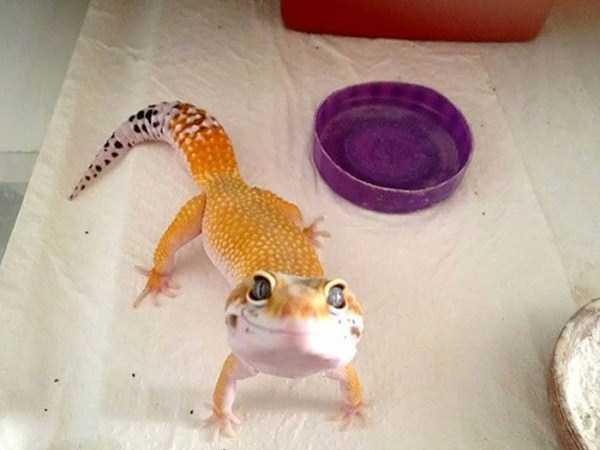 cute-reptiles (16)