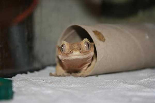 cute-reptiles (18)