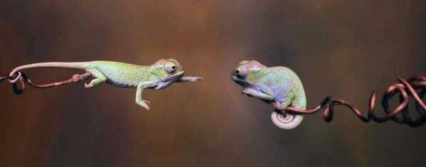 cute-reptiles (2)