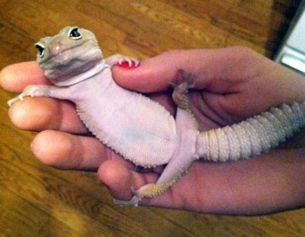cute-reptiles (20)