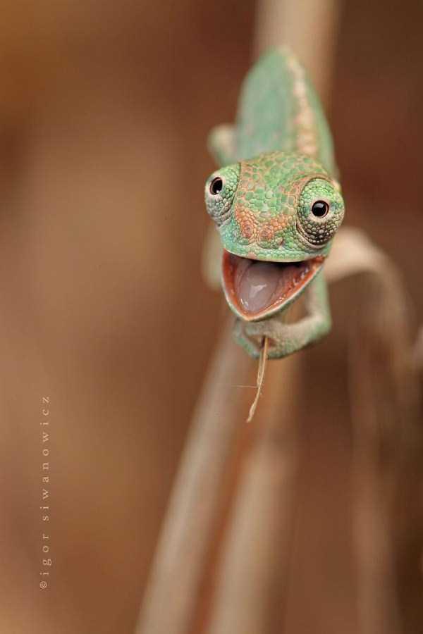 cute-reptiles (23)