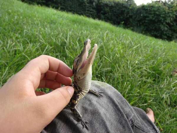 cute-reptiles (24)