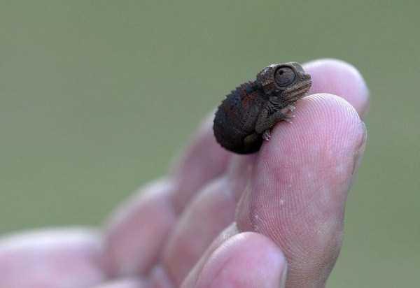 cute-reptiles (25)