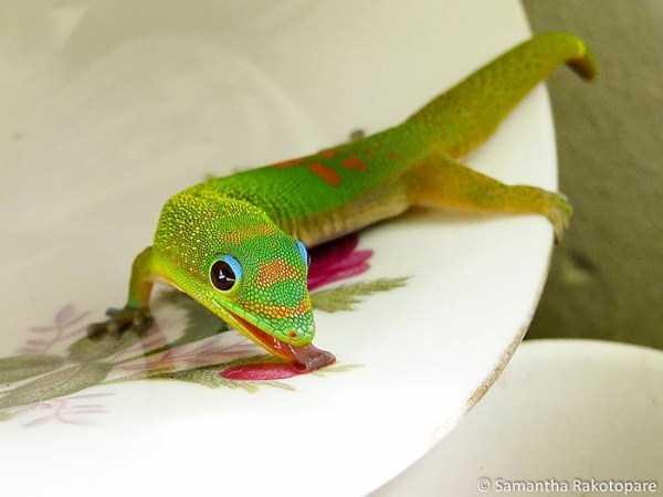 cute-reptiles (26)