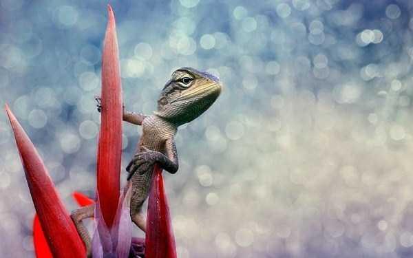 cute-reptiles (29)