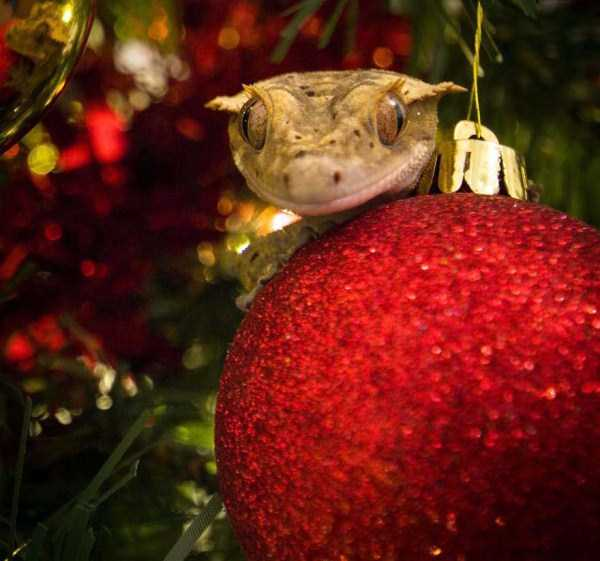 Awesomely Cute Reptiles (33 Photos