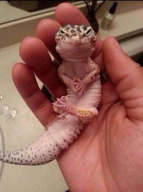 cute-reptiles (33)