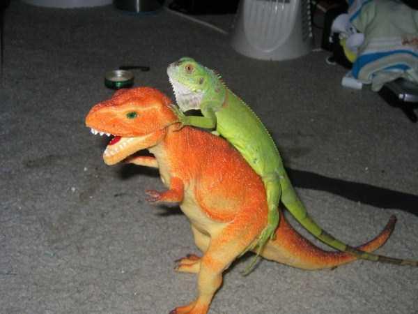 cute-reptiles (5)
