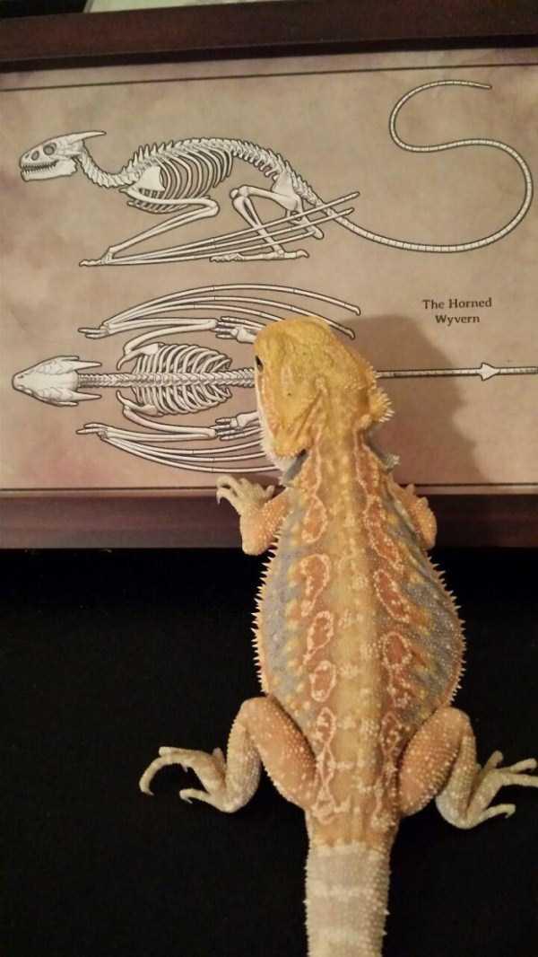 cute-reptiles (8)