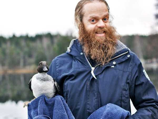 duck-saved-from-under-the-ice (4)