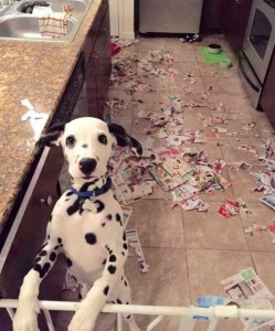 Pets Getting Surprised by Their Owners (30 photos) 1