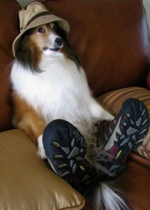 Pets Getting Surprised by Their Owners (30 photos) 14