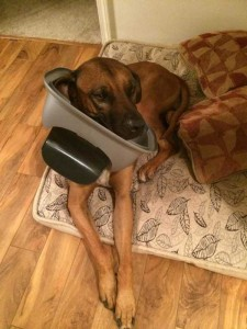Pets Getting Surprised by Their Owners (30 photos) 15