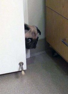 Pets Getting Surprised by Their Owners (30 photos) 24