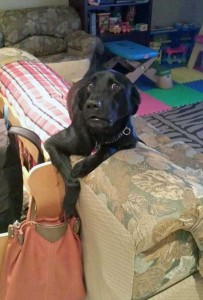 Pets Getting Surprised by Their Owners (30 photos) 28