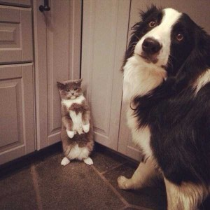 Pets Getting Surprised by Their Owners (30 photos) 3