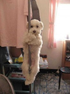 Pets Getting Surprised by Their Owners (30 photos) 30