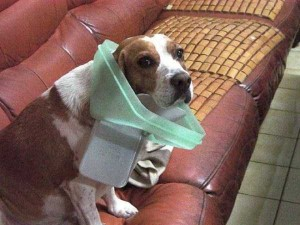 Pets Getting Surprised by Their Owners (30 photos) 4