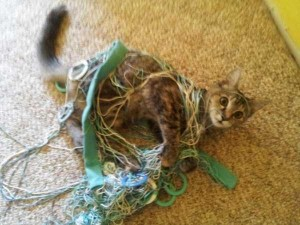 Pets Getting Surprised by Their Owners (30 photos) 6
