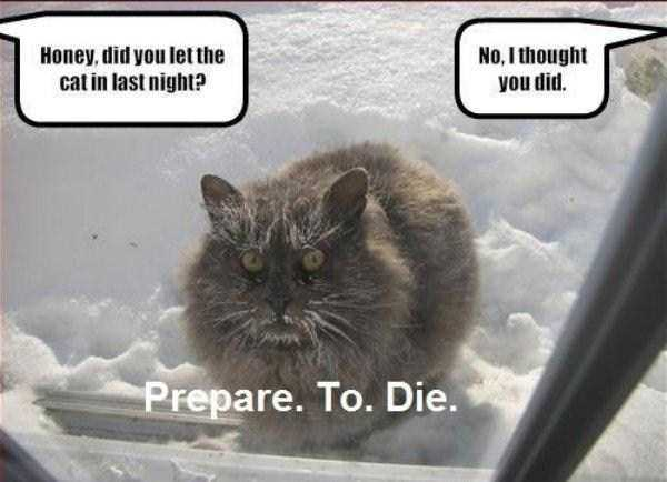 it-is-cold-outside (33)