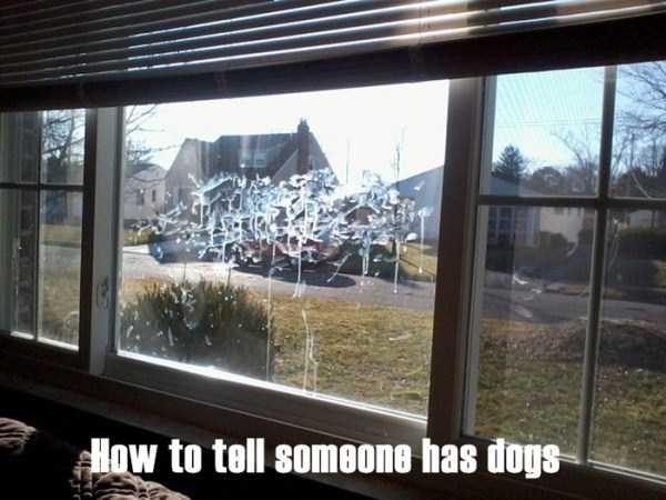 people-with-sense-of-humour (24)