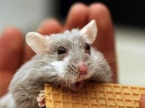 Cute Animals Making Surprised Faces (30 photos) 10