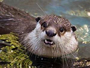 Cute Animals Making Surprised Faces (30 photos) 12