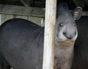 Cute Animals Making Surprised Faces (30 photos) 13