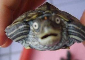 Cute Animals Making Surprised Faces (30 photos) 17