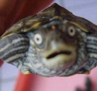 Cute Animals Making Surprised Faces (30 photos)