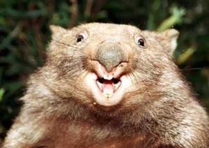 Cute Animals Making Surprised Faces (30 photos) 18