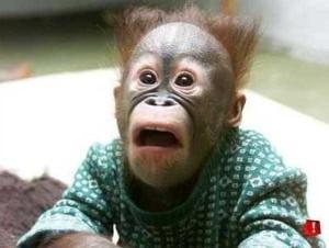 Cute Animals Making Surprised Faces (30 photos) 19