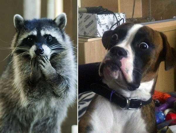 scared-animals (2)