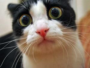 Cute Animals Making Surprised Faces (30 photos) 23