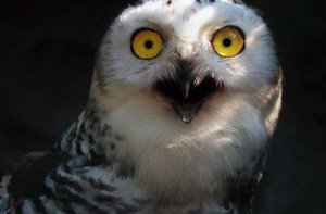 Cute Animals Making Surprised Faces (30 photos) 27