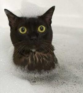 Cute Animals Making Surprised Faces (30 photos) 29