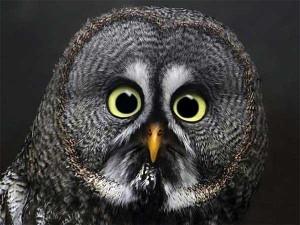 Cute Animals Making Surprised Faces (30 photos) 4